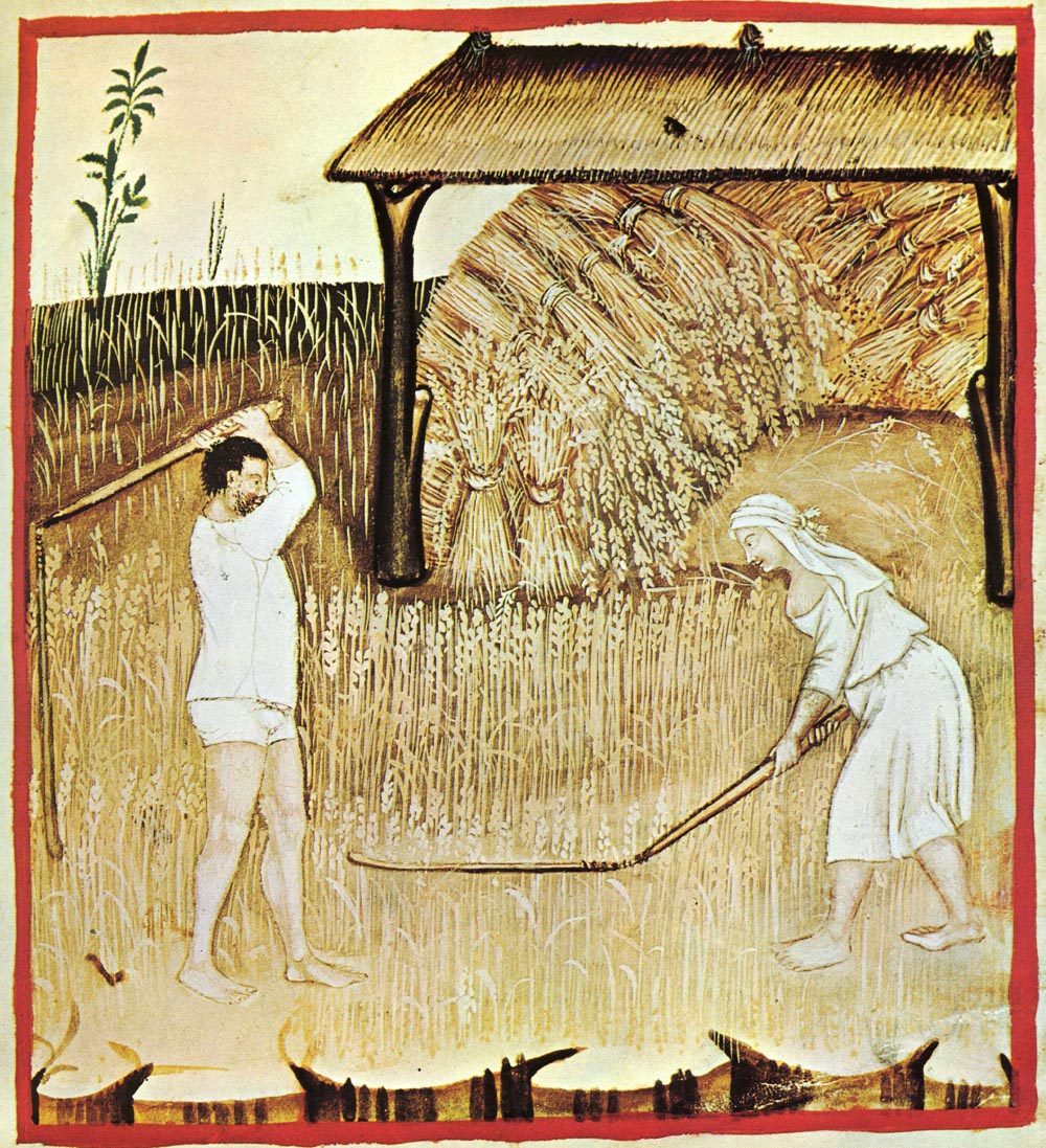einkorn threshing