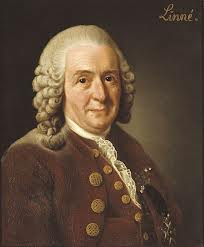 carl lennaeus, strawberry, strawberries, wild, botany, botanist