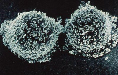 Immunity theory, Immune system, digestive system, digestion